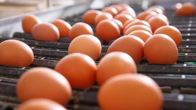 Estas son las marcas de huevos que podrían estar contaminados con salmonela