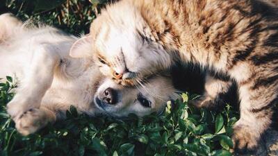 Chicago ayuda a mascotas afectadas por el huracán Dorian y así es como puedes adoptar a una