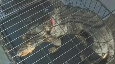 Perros y gatos rescatados de Las Bahamas tras la devastación dejada por Dorian buscan hogar en el sur de Florida