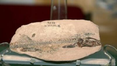 Hallan pez de 90 millones de años en México