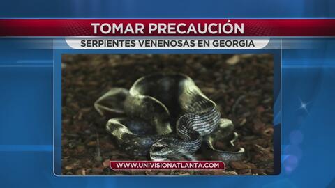 Mujer de Georgia encuentra serpiente en su patio; advierten sobre víboras venenosas
