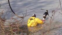 Video muestra cómo los bomberos rescatan a un perro de un estanque congelado