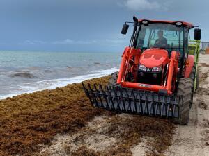 Toneladas de sargazo ya no estarán este fin de semana en las playas de Miami-Dade