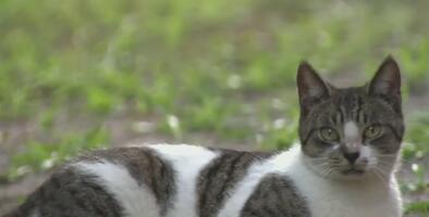 Por cada gato callejero que lleve al condado Miami-Dade para castrarlo le darán $15