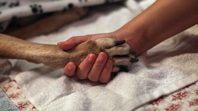 Rescatan a perro que fue atacado con ácido