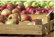 Austin ISD distribuirá comida gratis para menores de 19 años