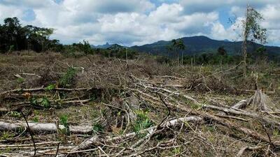 Estudio vincula el tráfico de cocaína con hasta el 30% de la deforestación de Honduras, Nicaragua y Guatemala