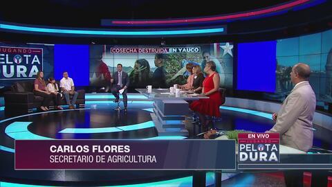 Cosecha destruida en Yauco, un problema común en fincas de la región