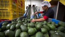 La importación de aguacate mexicano en EEUU sube durante la pandemia