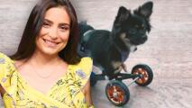 """""""Me explota el corazón"""": Ana Brenda está feliz de que su bebé Tomasa ya tiene rueditas y puede caminar"""