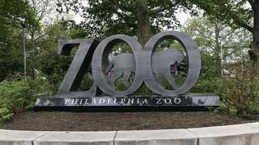 El trabajo no se detiene en el zoológico de Filadelfia a pesar del cierre de la ciudad por el coronavirus
