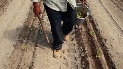 Campesinos, jardineros, meseros... Dónde están y quiénes contratan trabajadores con visas H2-A y H2-B