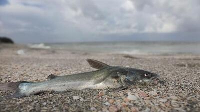 Preocupación en Miami por la llegada de la marea roja en algunas de sus playas