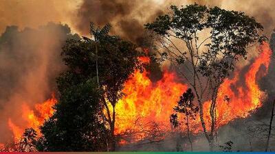 """""""Se están quemando los pulmones de la tierra"""": el incendio en el Amazonas y otras graves consecuencias del calentamiento global"""