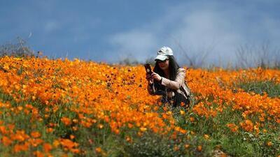 Cierran el paso a turistas que querían ver las colinas coloridas en California
