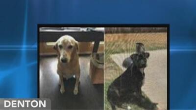 Autoridades de Denton buscan a tres sujetos que mataron a dos perros
