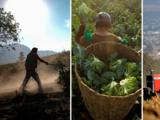 Mexicanos que trabajan en fincas despiertan interés en puertorriqueños, quienes ya piden trabajo