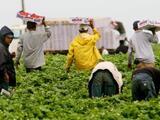 Sin importar estatus migratorio, empleadores deben pagar horas adicionales de enfermedad por covid 19