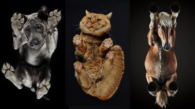 Animales desde una perspectiva insólita: las peculiares fotografías de perros, gatos y caballos tomadas desde abajo