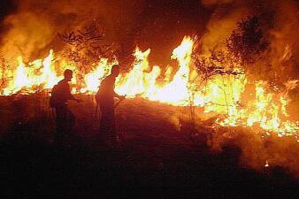 Los incendios no cesan en Brasil: en los últimos días se han declarado 1,100 nuevos focos