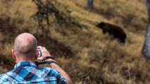 """La misteriosa y letal enfermedad que vuelve a los osos de California más """"amigables"""" con los humanos"""