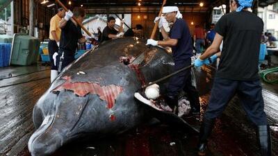 Japón reanudará la cacería comercial de ballenas después de 30 años
