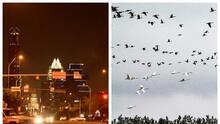 Piden a residentes y negocios de Austin que apaguen las luces en la noche para salvar a las aves migratorias