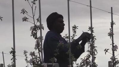 Aprende sobre las nuevas leyes a favor de los trabajadores agrícolas en Nueva York
