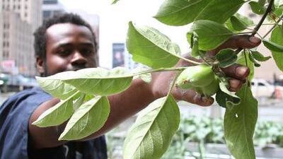 Cómo los residentes de Detroit hoy sobreviven gracias a sus propios cultivos