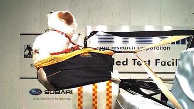 ¿Cómo asegurar a las mascotas en el carro? Te explicamos