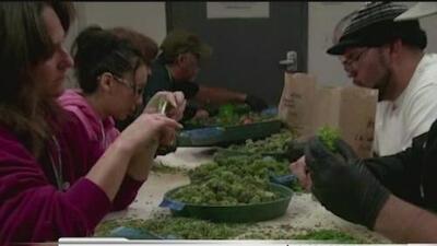 Marihuana recreativa será legal en California