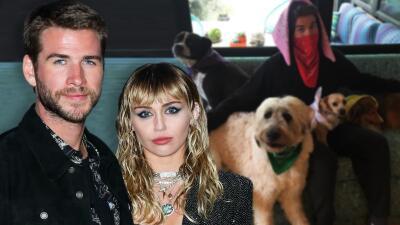 7 perros, 4 caballos, 3 gatos y 1 cerdo: Miley Cyrus perdió un esposo pero no su colección de mascotas