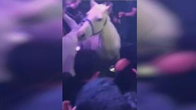 Cierran la discoteca de Miami Beach en la que se generó un caos por un caballo asustado