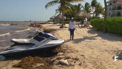 Seaweed affects Mexico's tourism and economy