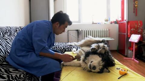 El curioso oficio de un artista que mantiene vivo el recuerdo de las mascotas que mueren