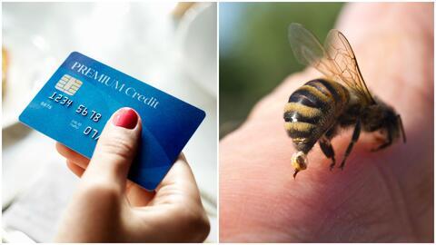 ¿Cómo una tarjeta puede salvarte la vida tras una picadura mortal de abeja?