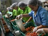Te explicamos qué significa el nuevo acuerdo sobre los tomates mexicanos, especialmente para los orgánicos